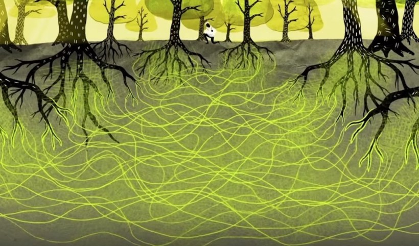 network-mycorrhizal-fungi-trees-forest-communication